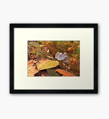 Woodland Autumn Framed Print