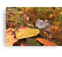 Woodland Autumn Canvas Print