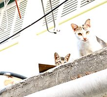 Cats on a hot tin roof by KarynL