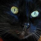 the look of the cat ... by jean-jean
