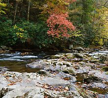 Tremont Autumn by Ron Sentell