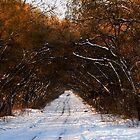 Winter road by Irina777