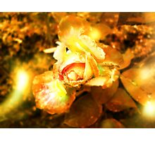 light within the rose Photographic Print