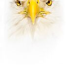 Eagle Eye by Janet Fikar