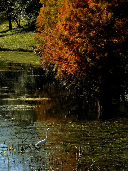Fall In Florida ~ Part Two by artisandelimage