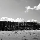 First snow by Vasil Popov