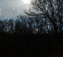 Starlight Walk-In by deb cole