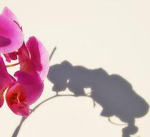 orquidea by Edel Montón Caño