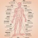 The Human Senses by Stephen Wildish