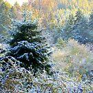 November Magic by Elaine Bawden