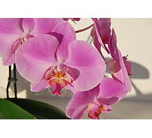 blooming orchid Photographic Print