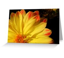 A Touch Of Orange Greeting Card