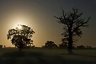 Sunrise, Trees And Shadows. by Darren Burroughs