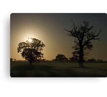 Sunrise, Trees And Shadows. Canvas Print