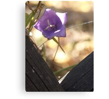 prying belle Canvas Print