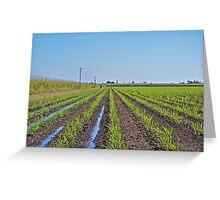 Young sugar cane Greeting Card