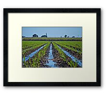Irrigation of Young Sugar Framed Print
