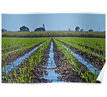 Irrigation of Young Sugar Poster