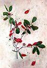 Red Berries Christmas Card by LouiseK