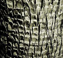 Tactile Palm by Jaee Pathak