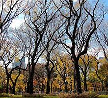 Sky trees, Autumn in Central Park - NYC by Alberto  DeJesus