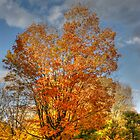 The Best of Autumn by KatMagic Photography