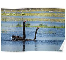 Black Swan Love 2 Poster