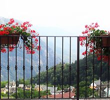 l'estate stà finendo.....fiori  by Guendalyn