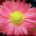 A flower © by Dawn M. Becker