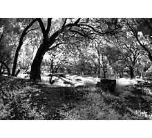 Trees by the river Photographic Print