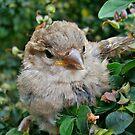 Garden Visitor by Judi Rustage