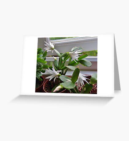Rhipsalidopsis (Spring Cactus) Greeting Card