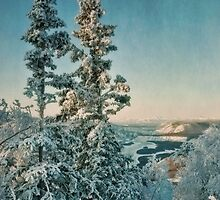 trees with a view by Priska Wettstein