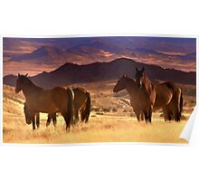 Tribal Lands and Wild Horses  Poster