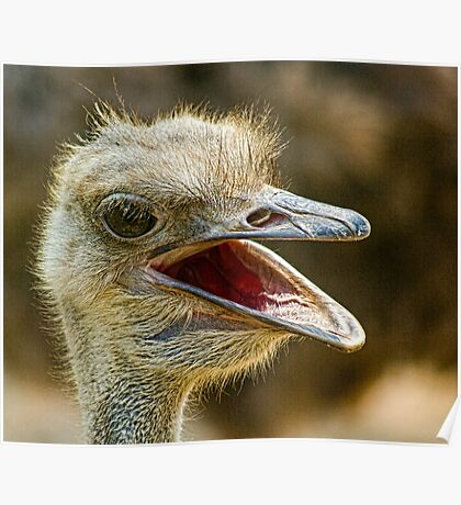 Ostrich, Chiang Mai Zoo, Thailand Poster