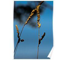 Waving Wheat Poster
