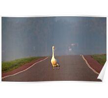 A stray bird Poster