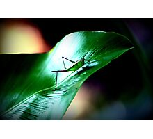 """ garden hopscotch "" Photographic Print"