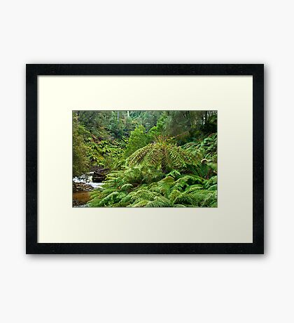 Ferny River Framed Print