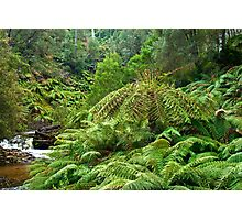 Ferny River Photographic Print