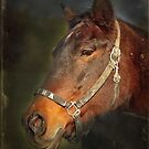 Old Cow Pony Mare by Bine