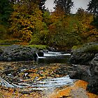 Pool Of Gold by Charles & Patricia   Harkins ~ Picture Oregon