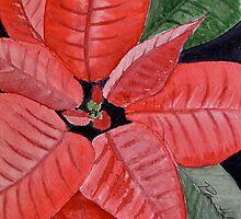 Poinsettia  by Pamela Hubbard