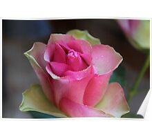 PR - Pink Rose Poster