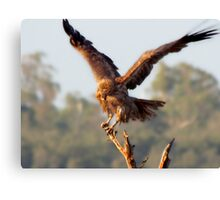A Juvenile Eagle hmm will have to update this lol.  Canvas Print