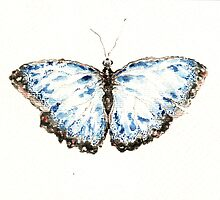 Blue buttefly by ildiko