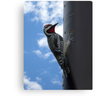 Metal Woodpecker in Toronto Metal Print
