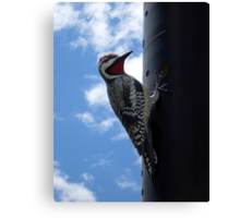 Metal Woodpecker in Toronto Canvas Print