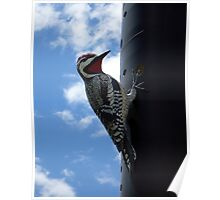 Metal Woodpecker in Toronto Poster