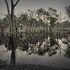 Blackwood River at Winnejup, Western Australia by Elaine Teague